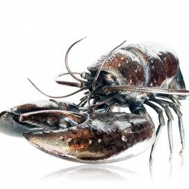 Buccellati Sterling Silver Lobster